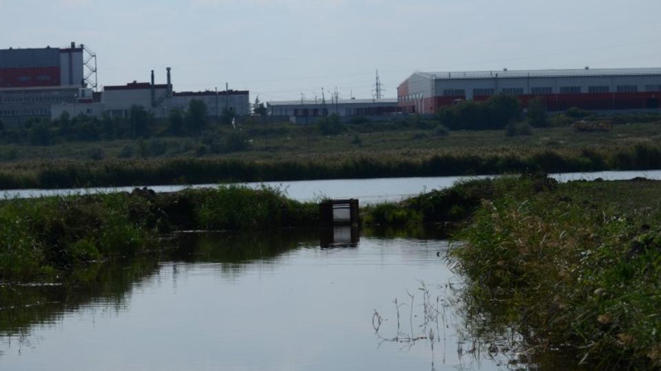 В Троицке на берегу реки были обнаружены трупы цапель