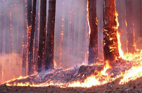 Развел в лесу фото 641-207