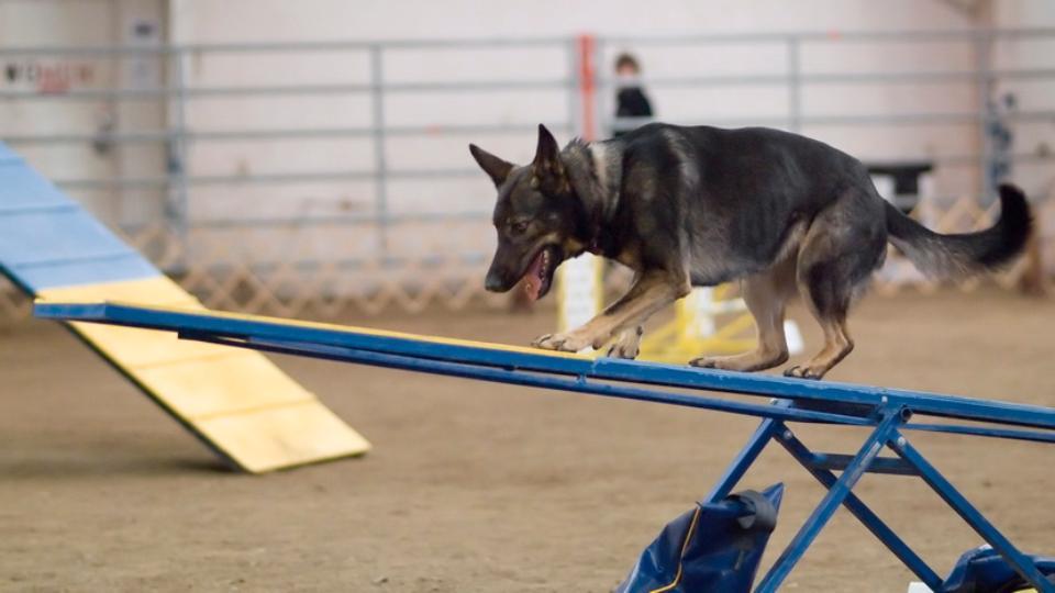 Челябинские собаководы незаконно строят площадки для дрессировок
