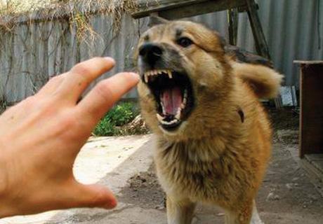 Растет число курян, покусанных бродячими собаками