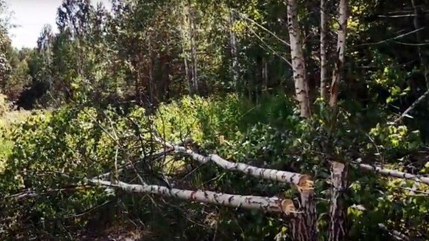 Прокуратура назвала вырубку деревьев в «Парковом» незаконной, заведено уголовное дело