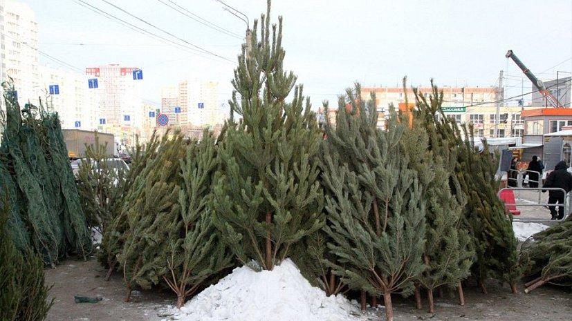 Елочные базары начнут работать в Челябинске с 15 декабря