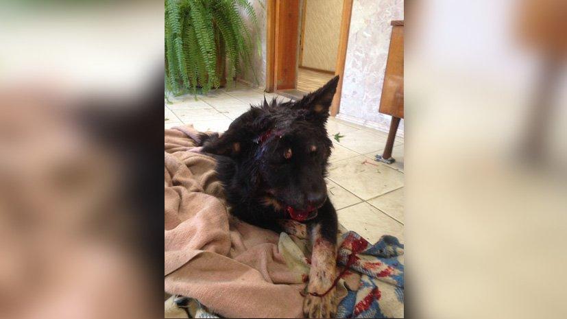 НаЮжном Урале возбуждено уголовное дело за беспощадное  обращение с звериным