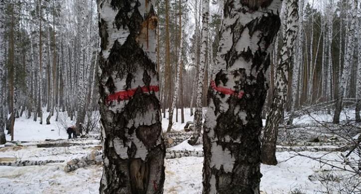 В Челябинске остановили вырубку деревьев в сквере на улице Захаренко