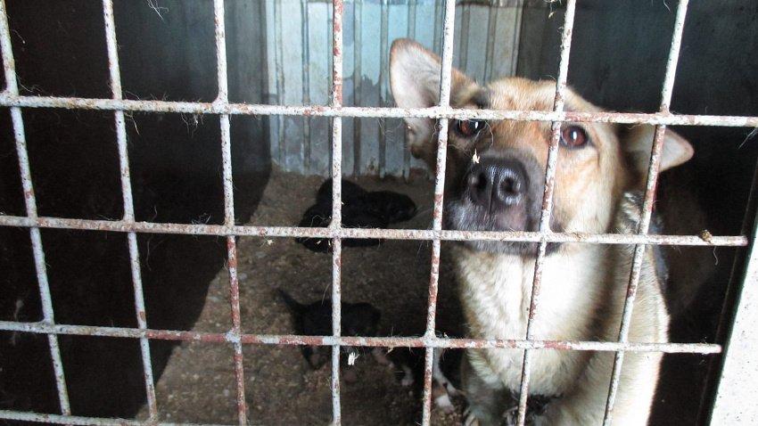 46 миллионов рублей на бездомных животных выделит министерство сельского хозяйства области