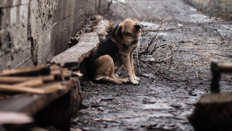 Собаку из Магнитогорска, над которой издевался живодер, нашли мертвой