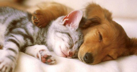 Домашние животные продлевают жизнь человека