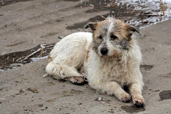 Полиция ищет организаторов массового убийства собак в Каслях