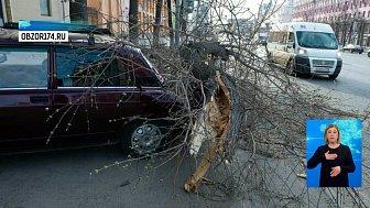Сильный ветер в регионе снес крыши и повалил деревья