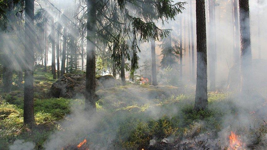 В Челябинской области ввели противопожарный режим с 1 мая