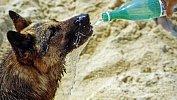 Ветеринар изСатки рассказал, как помочь домашним питомцам справиться сжарой