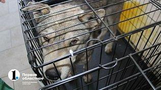 В главной роли собаки: челябинцы сняли клип вподдержку бездомных животных
