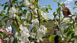 В Челябинской области развивают промышленное садоводство
