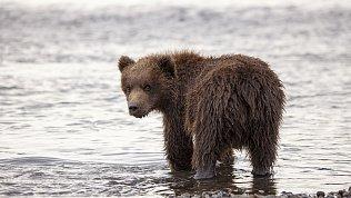 Житель Чебаркуля вывел медведя напрогулку попляжу