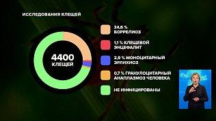 Случаи укусов клещей на Южном Урале