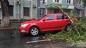 В центре Челябинска наавтомобиль упало дерево