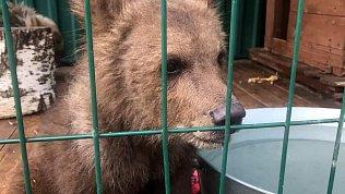 У медвежонка счебаркульского пляжа появился косолапый сосед изПерми