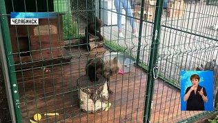 В челябинский приют передали медведя