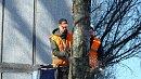 В Челябинске спилят 20 деревьев для строительства перекрестка