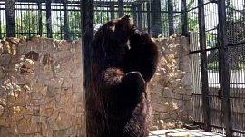 Мишка освежился под душем: видео из Челябинского зоопарка