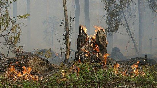 Интервью на Business FM: лесные пожары