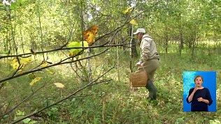 Ягодник потерялся в лесу