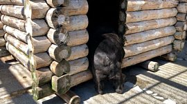 Сложное утро гималайских медведей попало на видео