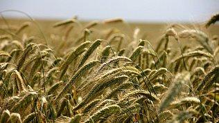 В Челябинской области вдва раза снизили налог для сельхозпроизводителей