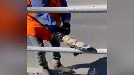 Ограждения красят варежкой: видео инициативного челябинца