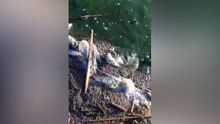 Зелёная вода, белая пена: видео с Шершнёвского водохранилища