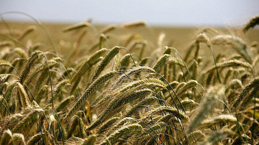 Налог для южноуральских аграриев снизили вдвое