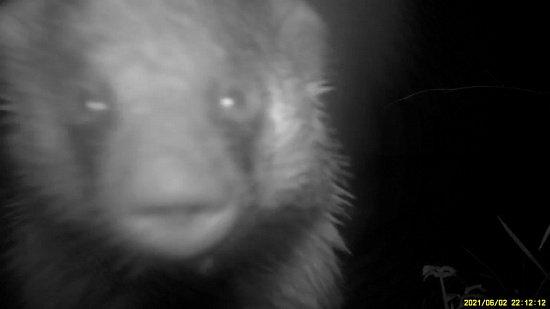 «Всем, кто меня видит, — привет!», — видеопослание от барсука с Таганая
