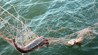 Полиция возбудила уголовные дела после незаконного отлова рыбы вВерхнеуральском районе