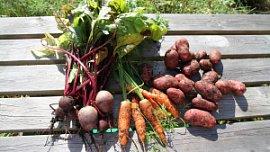 В Челябинской области растут цены на сезонные овощи