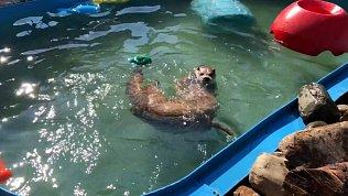Операцию спасения животных от жары сняли на видео в зоопарке