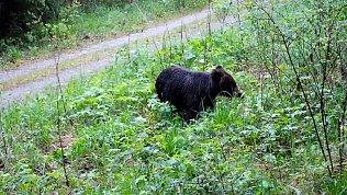 Медвежий завтрак попал на видео в нацпарке «Зигальга»