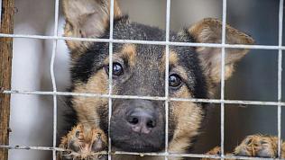 Алексей Текслер определил порядок выделения денег частным приютам для бездомных животных