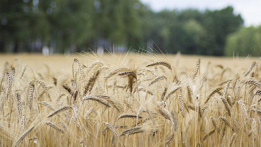 Семейные фермы Челябинской области получат 40 млн рублей на развитие производства