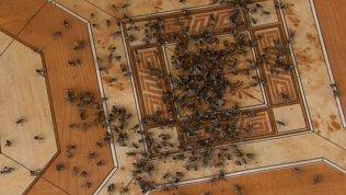 Жители села Муслюмово обвиняют местную птицефабрику в нашествии мух