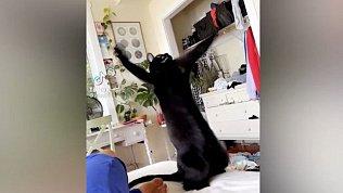 Мех и смех: веселый ретривер, танцующий кот и расстроенная хаски