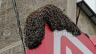 Магнитогорцев напугал рой пчел навывеске магазина