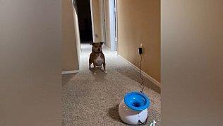 Мех и смех: уставшая кошка, играющий пес и ругающийся доберман