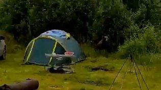 Во время сплава на стоянку туристов забрался медведь