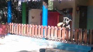 В Миассе детский сад атаковал рой ос