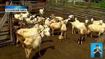 В регионе подсчитают животных и посевы
