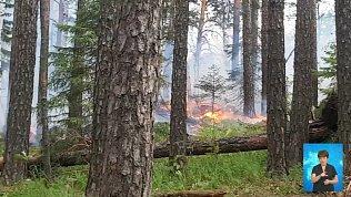 Пожарные и спасатели потушили пламя в лесу