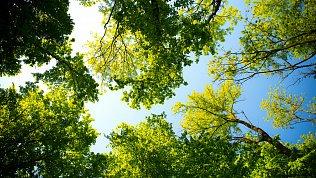 Мэрия определит границы леса вновых микрорайонах Челябинска