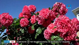 Самые красивые сорта роз в рубрике «Руки садовода»
