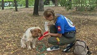 Как помочь собаке легче перенести аномальную жару