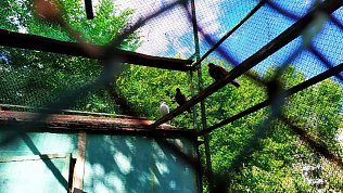 Челябинский театр кукол объявил фотоконкурс налучший снимок голубятни